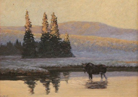 Female Moose in River