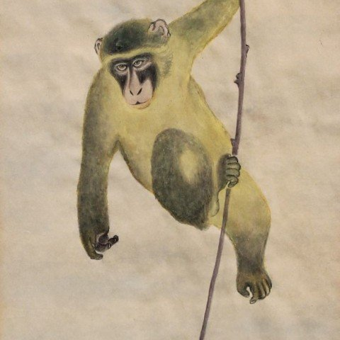 Monkey on a Vine