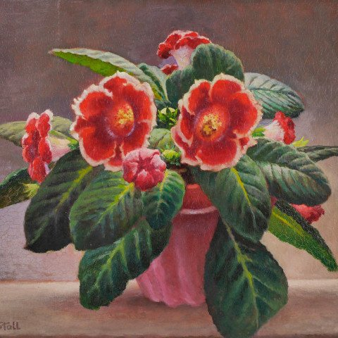 Begonias by Rolf Stoll