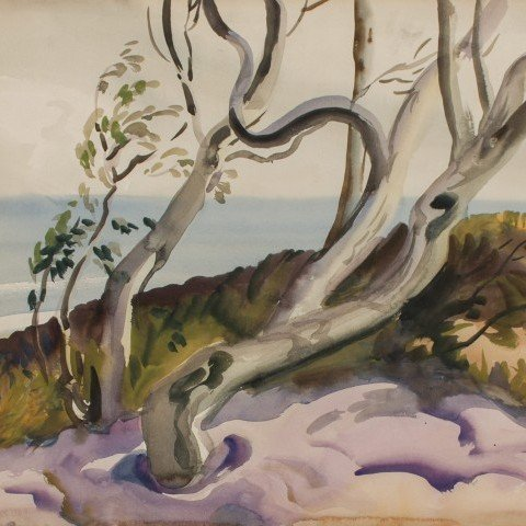 Study for Tree at Roanoke Island, Virginia
