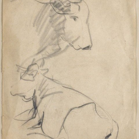 Sketches of Cows