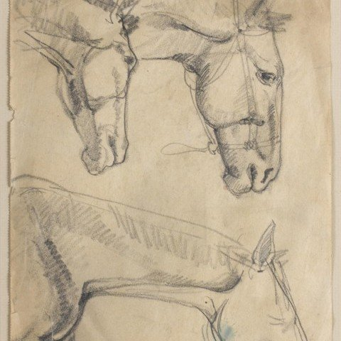 Sketches of Horses