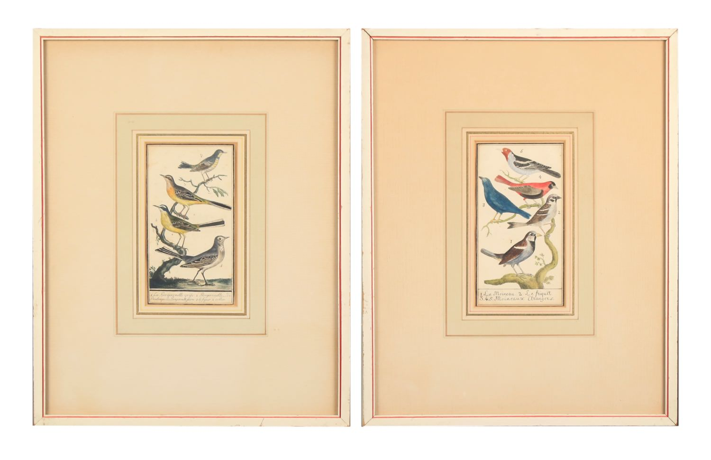 Two 18thc. Ornithological Prints