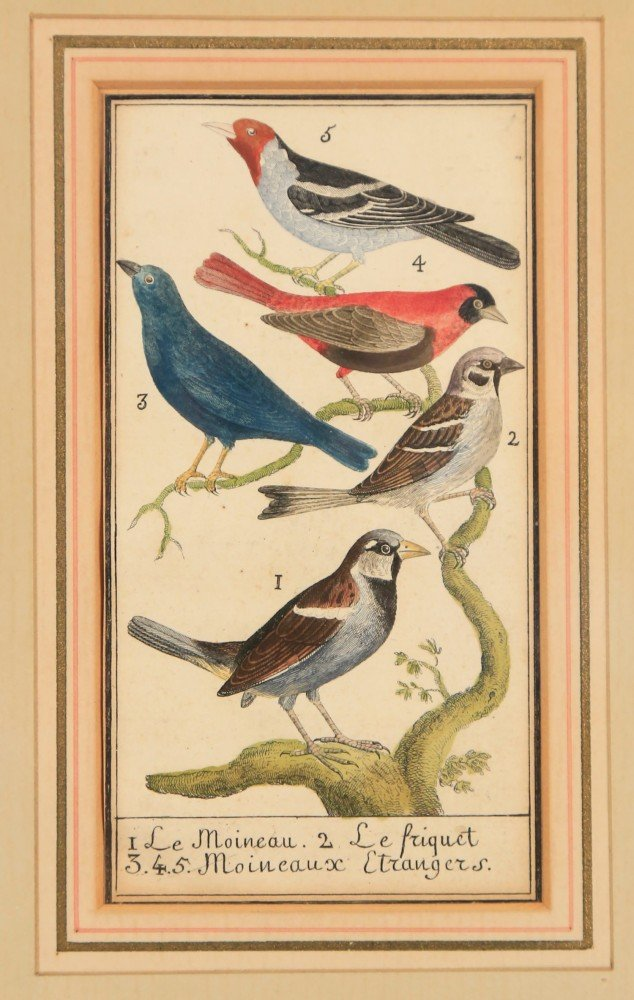Two 18thc. Ornithological Prints
