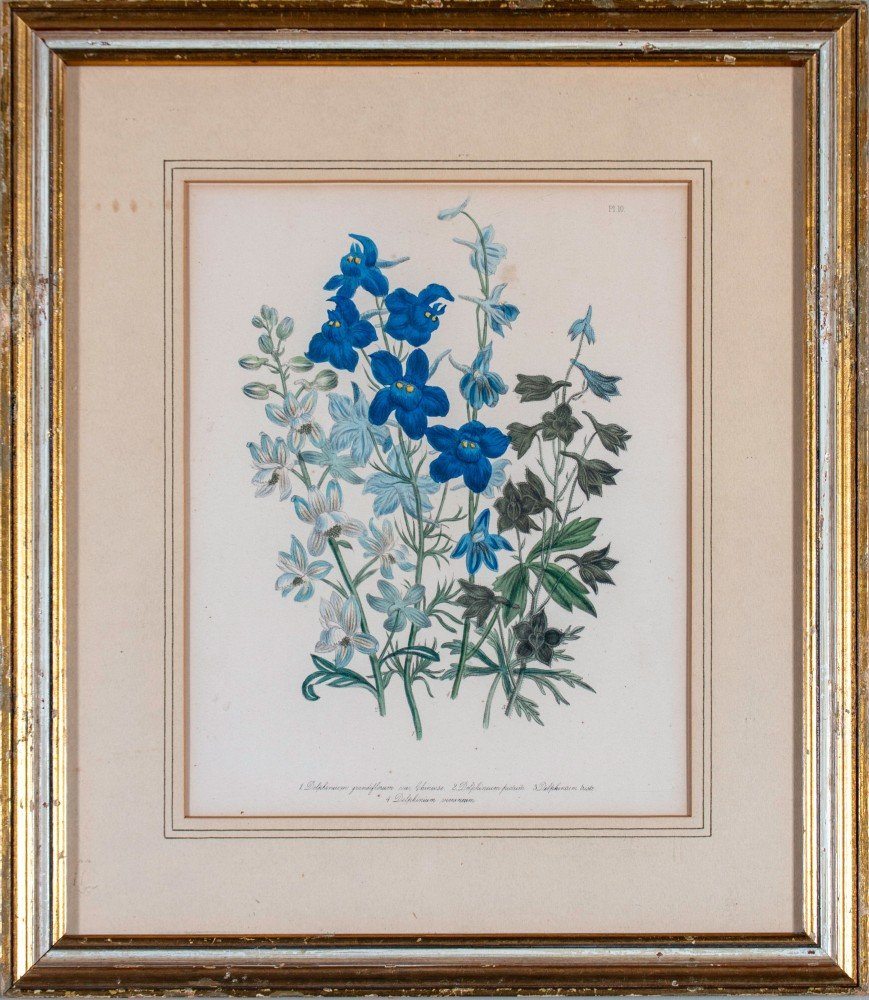 Three Hand colored Botanical prints Delphinium, Aquilegia, Matthiola