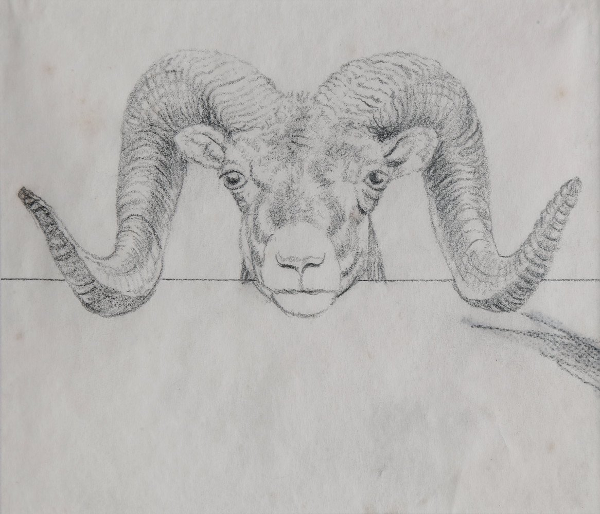 Animal Graphite on Paper Drawing Sketch: