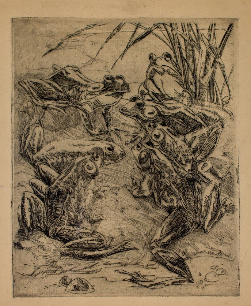 Frogs by Frank Nelson Wilcox