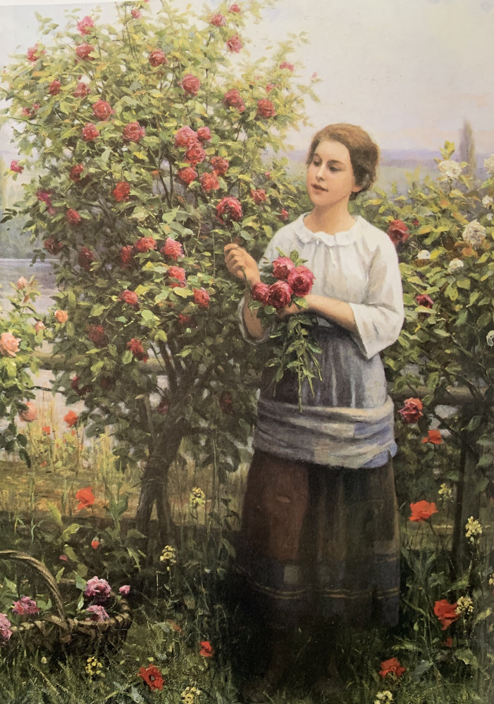 Gathering Roses by Daniel Ridgway Knight