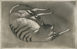 Animal Aquatint Drawing: